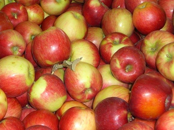 Tarbijad soovivad mahetooteid tavapoest ja otse tootjalt