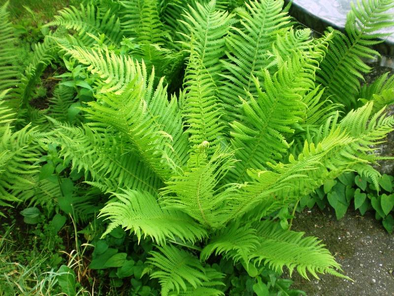 Taimed, mis aitavad õhku puhastada