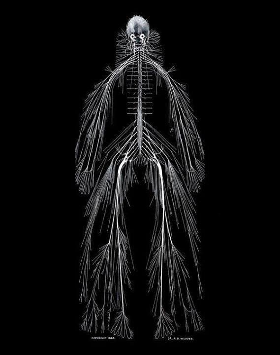 Närvisüsteem.jpg