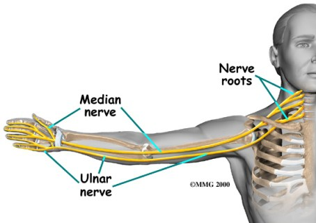 ulnar-nerve-distribution