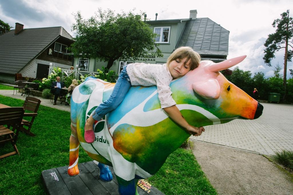 Värviline piimalehma skulptuur hakkab erinevates Eesti linnades propageerima piimatoodete tarbimist