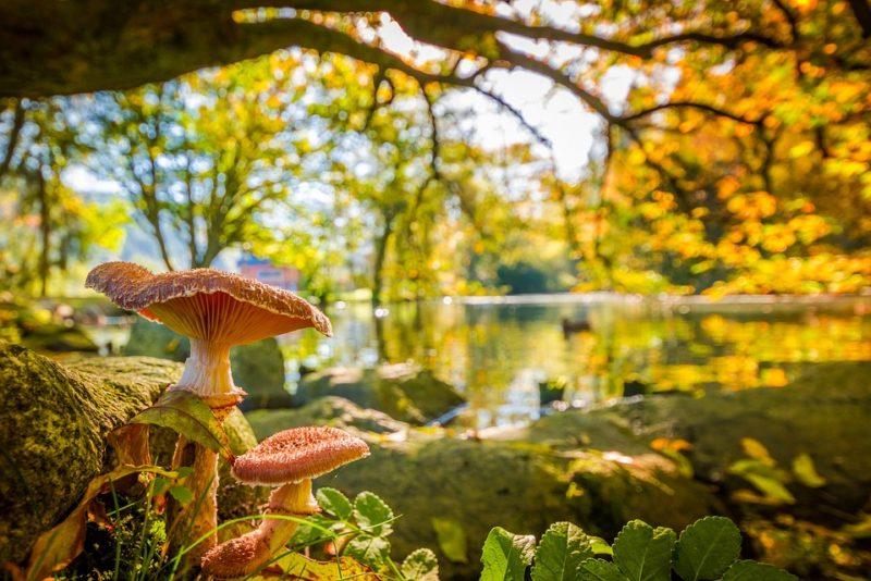 Tundmatud seened tasub metsa jätta!